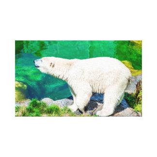 Polarer Bär der Leinwand