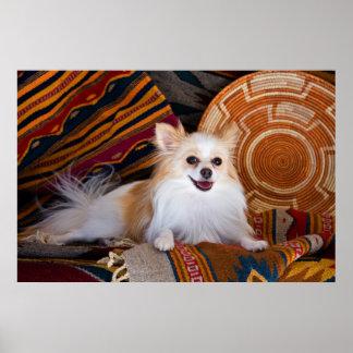 Pomeranian se trouvant sur des couvertures poster