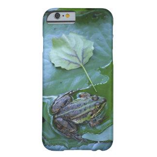 Pool-Frosch, Amperauen, Deutschland Barely There iPhone 6 Hülle