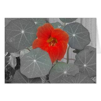 Pop der roten Blume, leer Karte