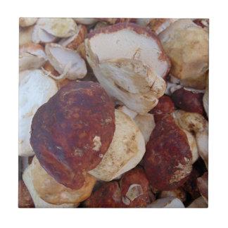 Porcini Pilze Kleine Quadratische Fliese