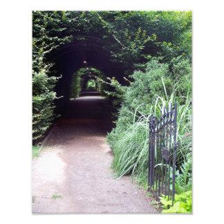 Porte couverte de bordure de haies et de jardin photo d'art