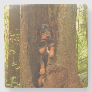 Portland-Baum Steinuntersetzer