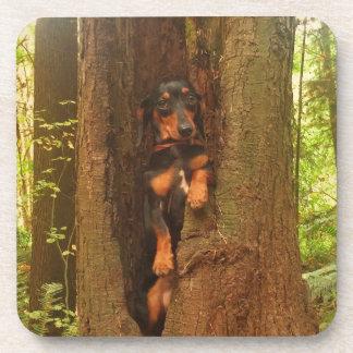 Portland-Baum Untersetzer
