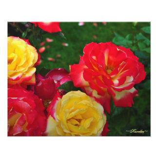 Portland-Rosen-Garten-Fotografie durch Karrilee 20