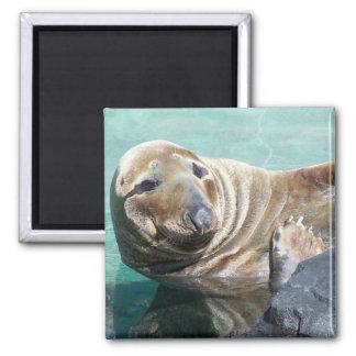 Portrait gris de joint magnet carré