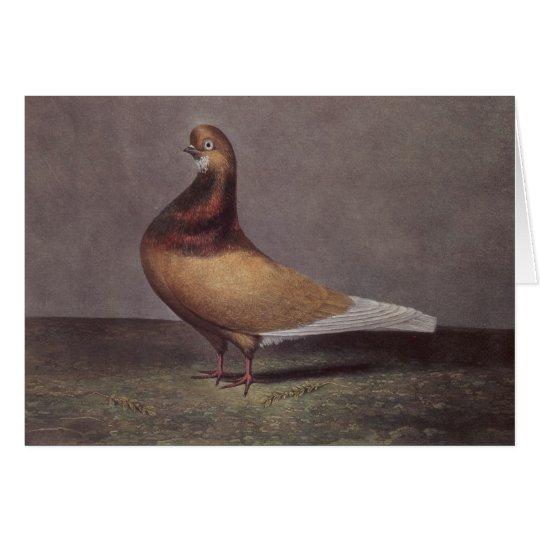 Porträt einer Bart-Taube Grußkarte