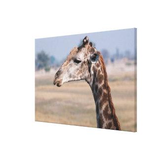 Porträt einer Giraffe Leinwanddruck