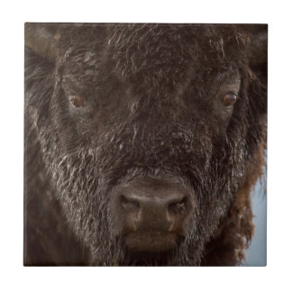 Porträt eines Bisons Stier im Regen Fliese