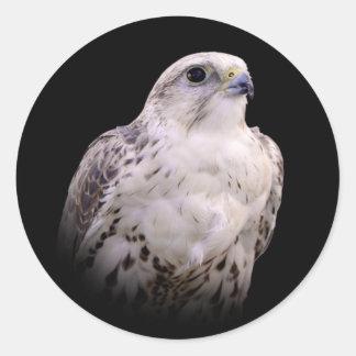 Porträt eines neugierigen Saker Falken Runder Aufkleber