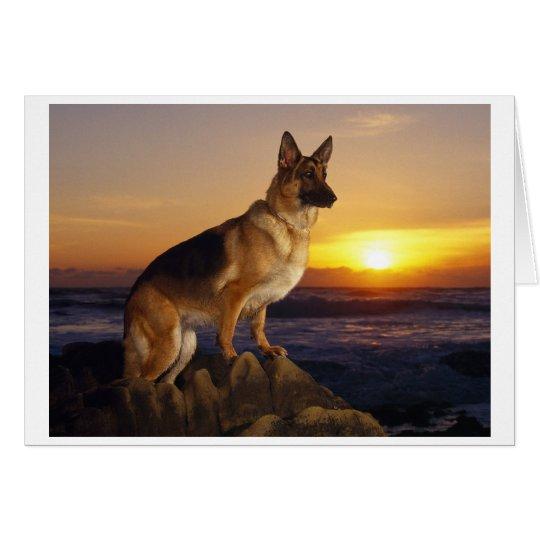 Porträt eines Schäferhund-Hundes oder des Karte