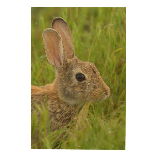 Porträt eines Waldkaninchen-Kaninchens Holzleinwand