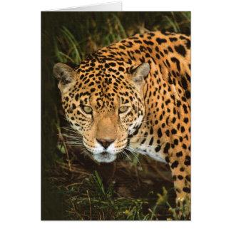 Porträt von Jaguar - groß, schöne Katzen Karte
