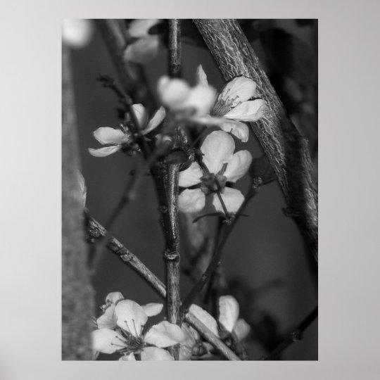 Poster B&W floral - fleurs sensibles 2