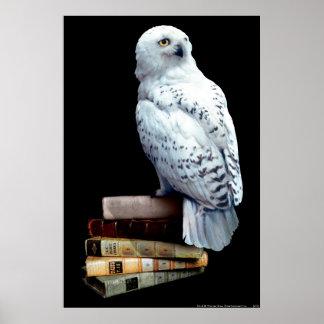 Poster Hedwig sur des livres