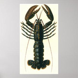 Poster Homard vintage, crustacé marin de la vie d'océan