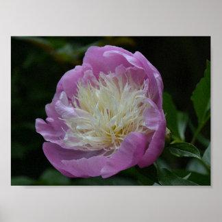 Poster Parc floral de vignes de fleurs de fleurs