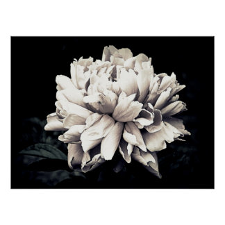Noir & Blanc