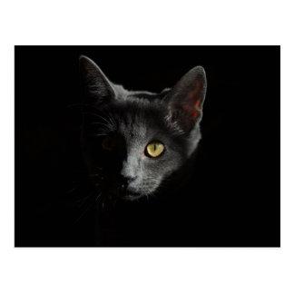 Postkarte der schwarzen Katze
