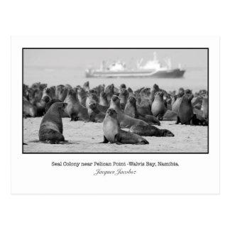 Postkarte der Siegel-Kolonie