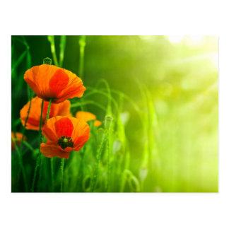 Postkarte - Klatschmohnblumen