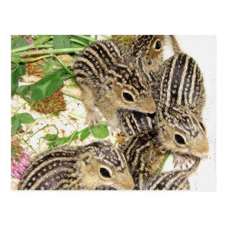 Postkarte - Linie Grundeichhörnchen, Illinois des