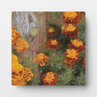 Prachtvolle Ringelblumen Fotoplatte