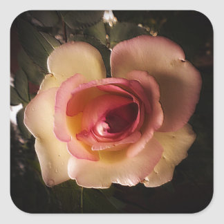 Prägeartige Sommer-Rose Quadratischer Aufkleber