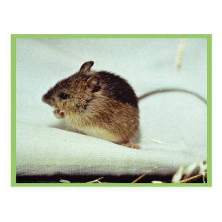 Prebles Wiesen-springende Maus Postkarte