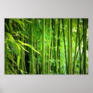 Pression de toile toile Canvas impression   bambou Poster