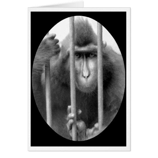 Primat ohne Bewährung Grußkarte