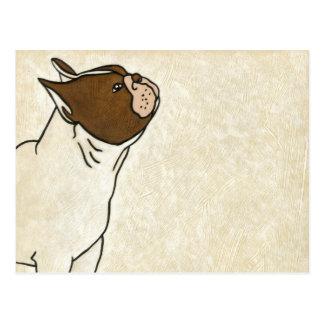 Profil der französischen Bulldogge oben schauend Postkarte