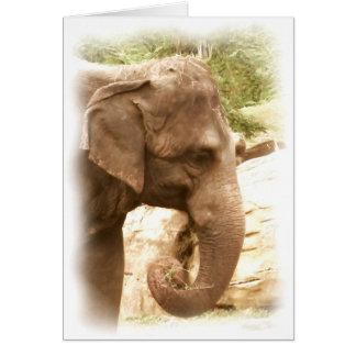 Profil eines indischen Elefanten Karte