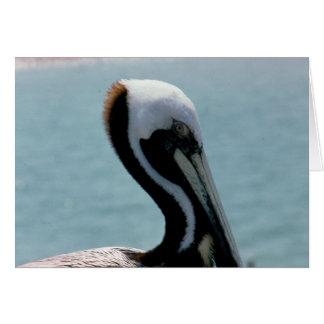 Profil erwachsenen Brown-Pelikans Karte
