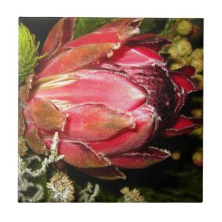 Protea-Blume Kleine Quadratische Fliese