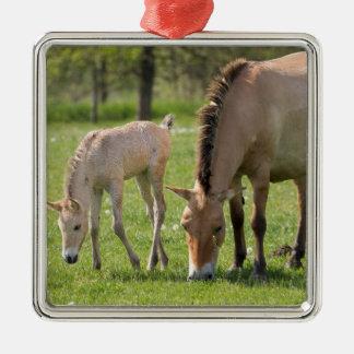 Przewalskis Pferd und Fohlen weiden lassen Silbernes Ornament