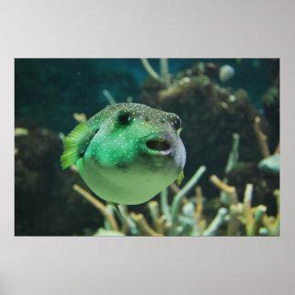 Puffer-Fische Poster