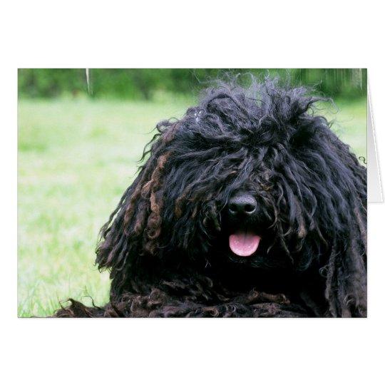 Puli Hundegruß-Karten Grußkarte