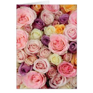 Pulver farbige Rosen durch Therosegarden Karte