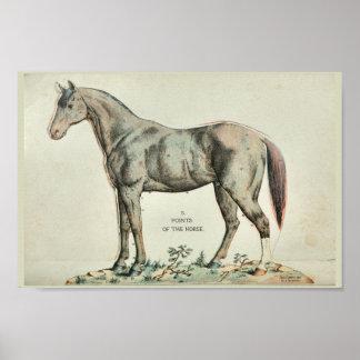 Punkte des PferdeVintagen Anatomie-Druckes Poster
