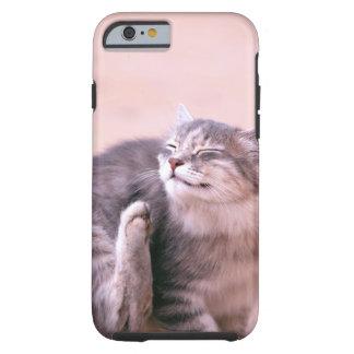 Pussy in der Sorgfalt Tough iPhone 6 Hülle