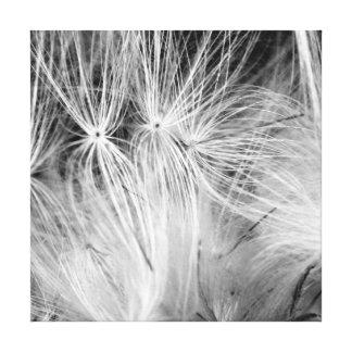 Pusteblume Schwarz Weiß Leinwanddruck