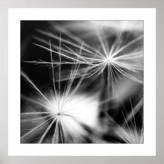 Pusteblume Schwarz Weiß Poster