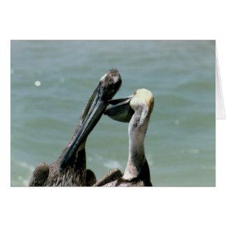 Putzende Brown-Pelikane Karte