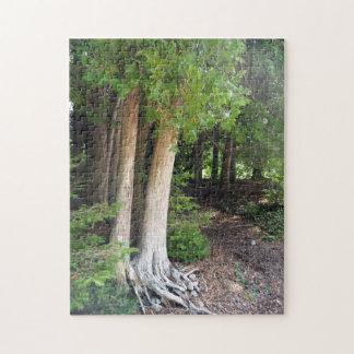 Puzzle Chemin forestier 586