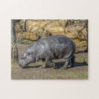 Pygmäenflusspferd-Fotopuzzlespiel