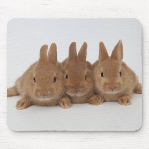 Rabbits.Netherland Zwerge Mousepad