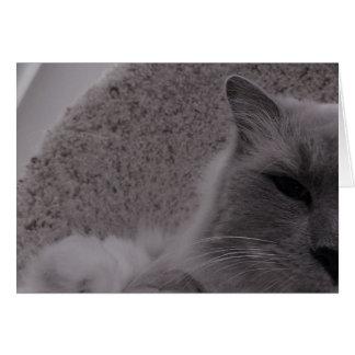 Ragdoll Katze/Noir, Karte