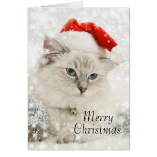 Ragdoll Weihnachtskarte Karte