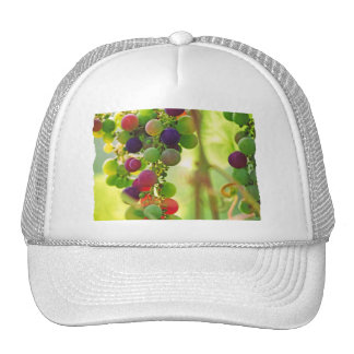 Raisins de beaucoup de couleurs casquette